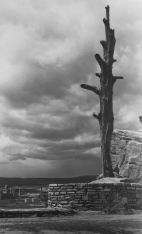 Hangman S Tree 940 Skyline Drive Rapid City Sd Pennington County South Dakota Historical Photos South Dakota Digital Archives